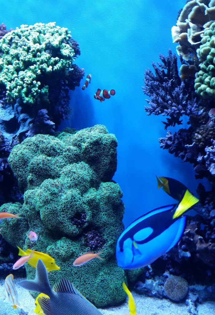 Finding Dory at the Monterey Bay Aquarium