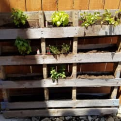 How to Build a Pallet Garden for Herbs or Micro Greens