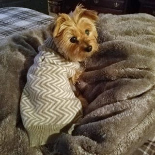 Caring for a Special Needs Pet: Tips from Missie the Yorkie