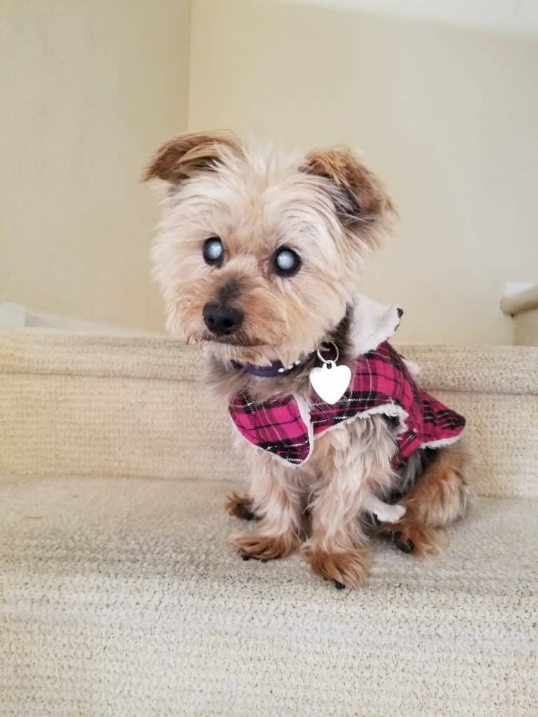 dog with kidney disease