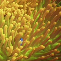 The Creation of Finding Dory, From Script to Screen