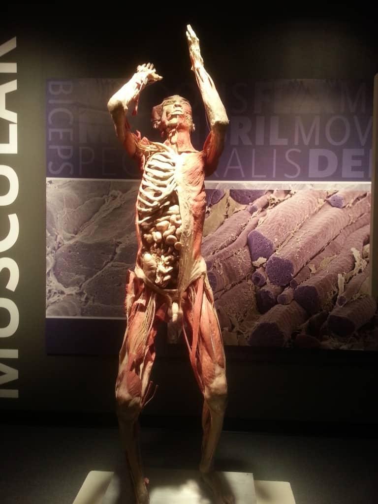 bodies the exhibit