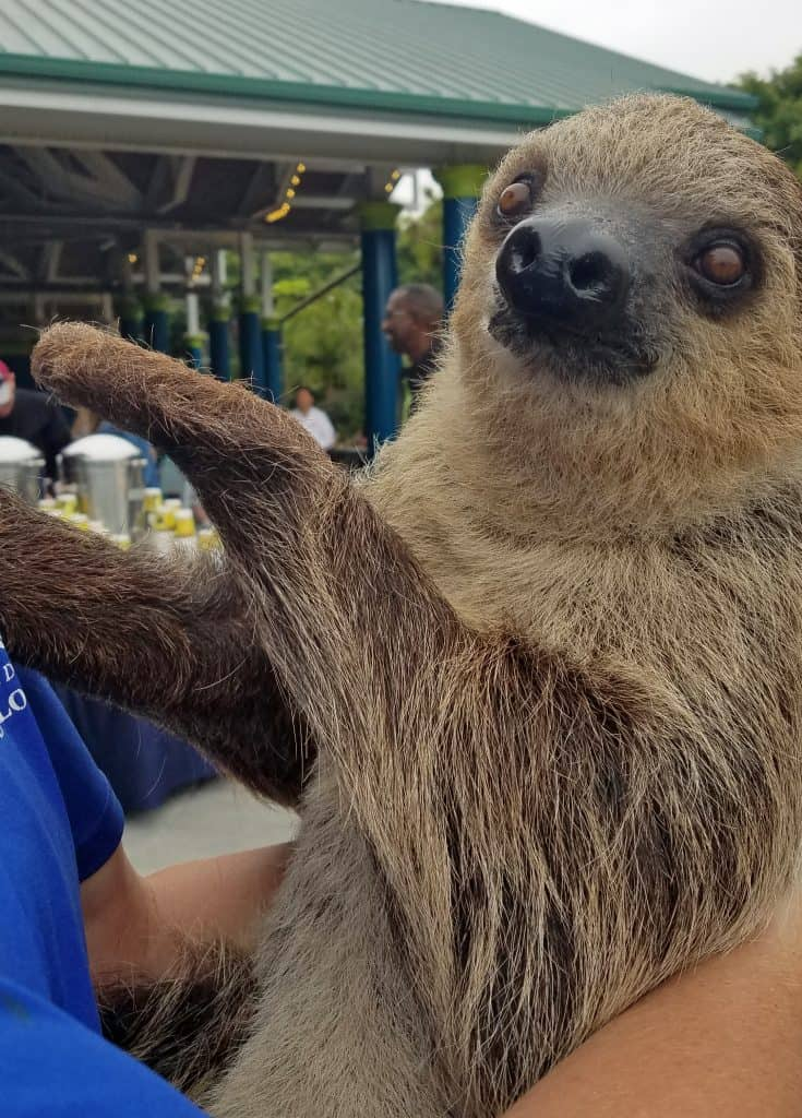 tess the sloth