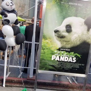 The New Warner Bros and IMAX Movie Pandas, Narrated by Kristen Bell