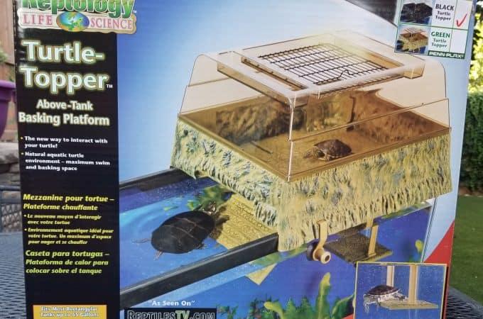 turtle topper