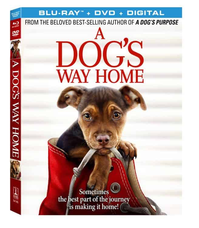 movie for dog lovers