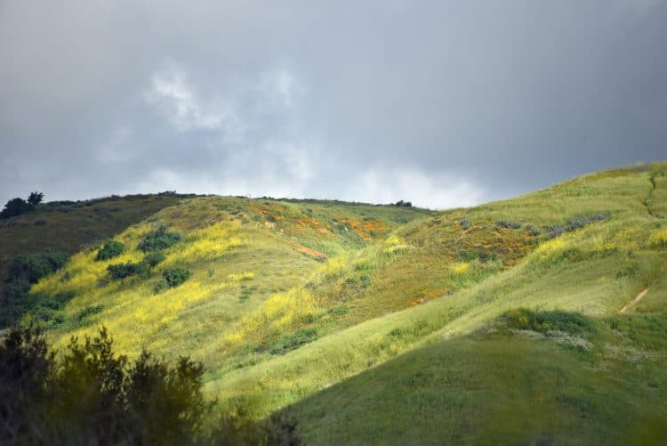 california superbloom at chino hills state park
