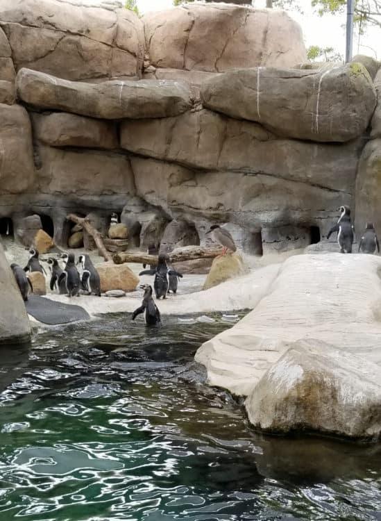 santa barbara zoo animals