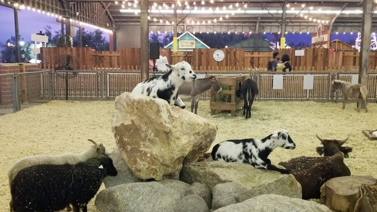 2019 la county fair farm animals