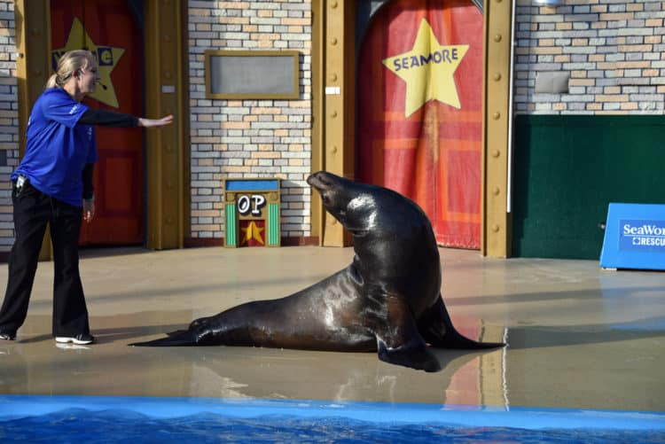 sea world san diego rescue sea lion