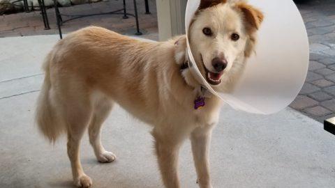 national pet month dog