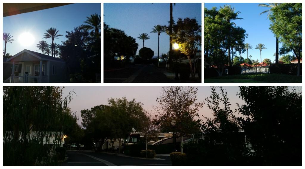golden village palms rv resort